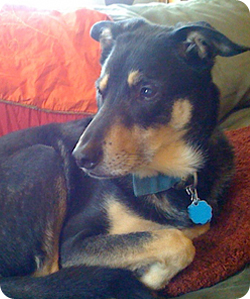 Sebastian, first dog owned by Dog Obedience Trainer Christine Kozlek in State College, PA