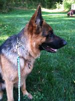 Dog Obedience class graduate