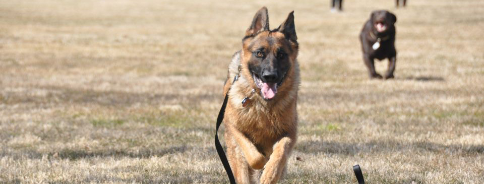 Dog Training Classes Info in State College, PA