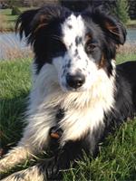 Micah, Dog Obedience Class Graduate