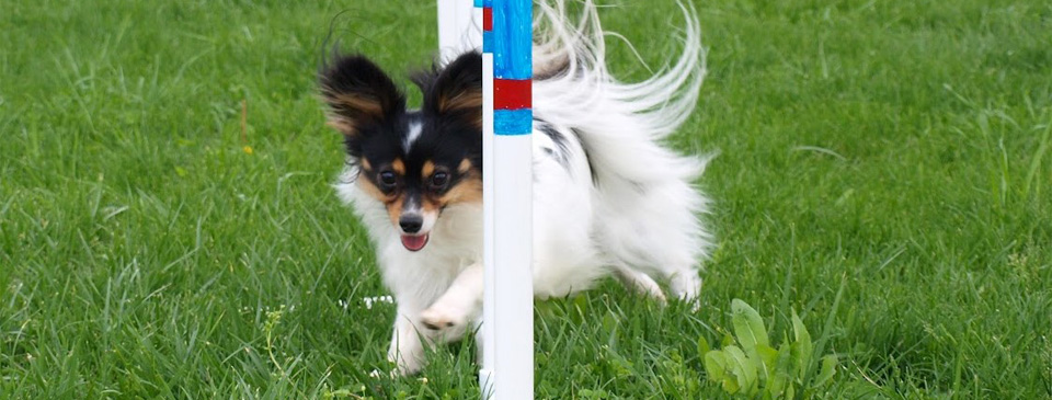 Good Foundations Canine Dog Agility Training Classes in State College PA